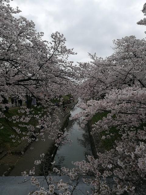 f:id:moni-san:20170408180846j:image