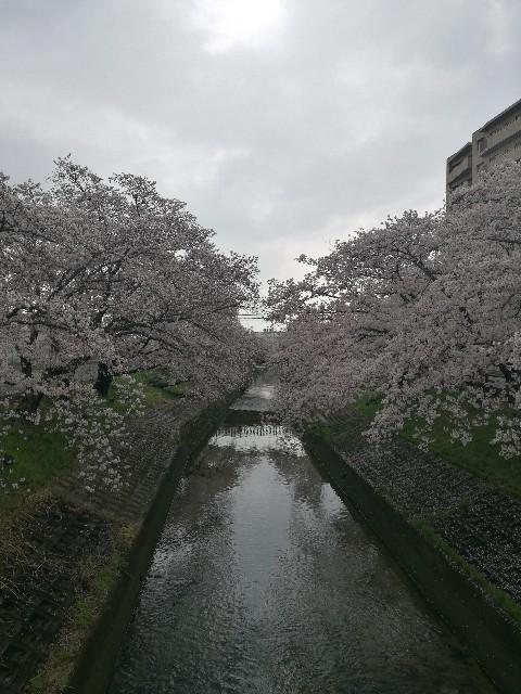 f:id:moni-san:20170408180909j:image