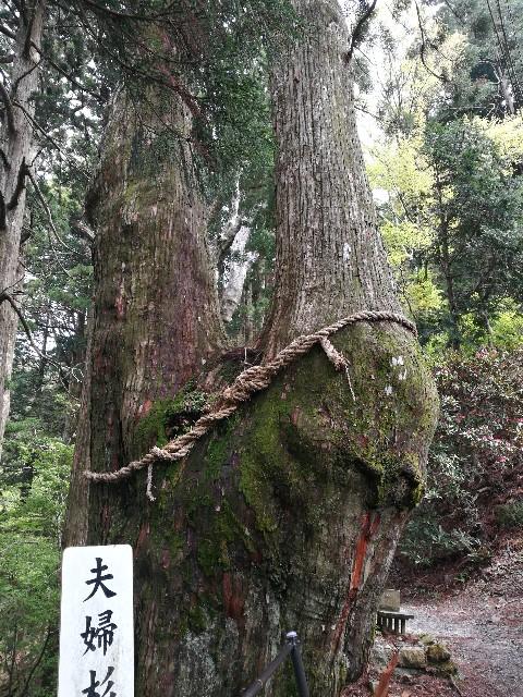 f:id:moni-san:20170515211511j:image
