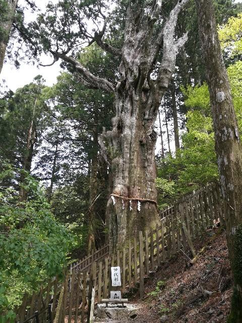 f:id:moni-san:20170515211525j:image
