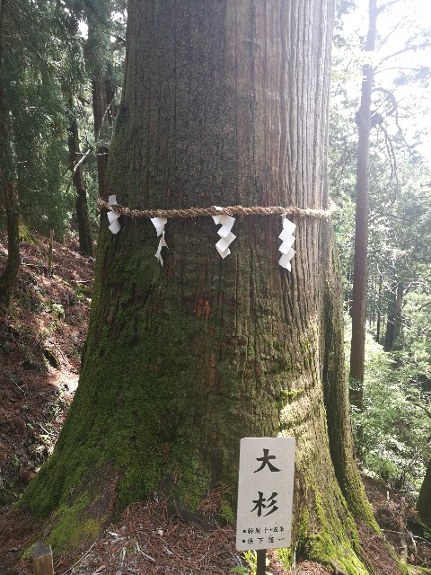 f:id:moni-san:20170515212210j:image
