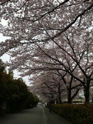 f:id:monkichi64:20120422133840j:image:w360