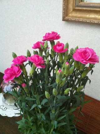 f:id:monkichi64:20120514181039j:image:w360