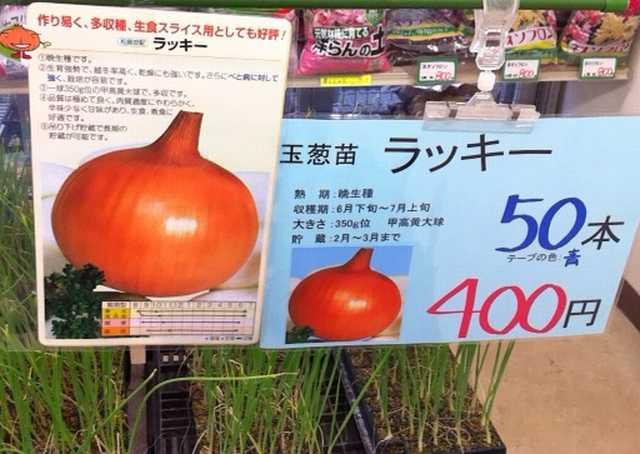 f:id:monkichi64:20121025151001j:image