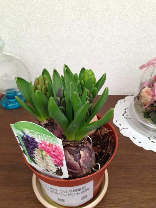 f:id:monkichi64:20131225090955j:image