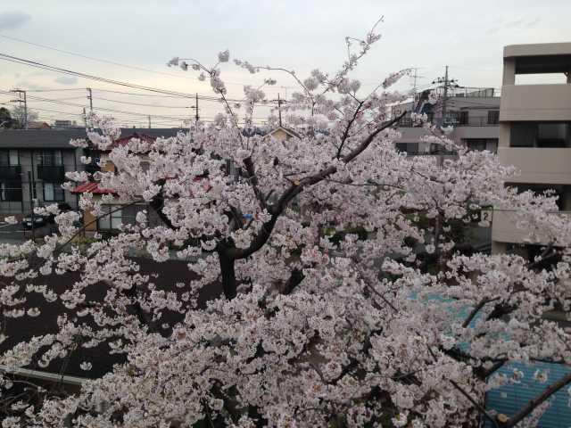 f:id:monkichi64:20140402162913j:image