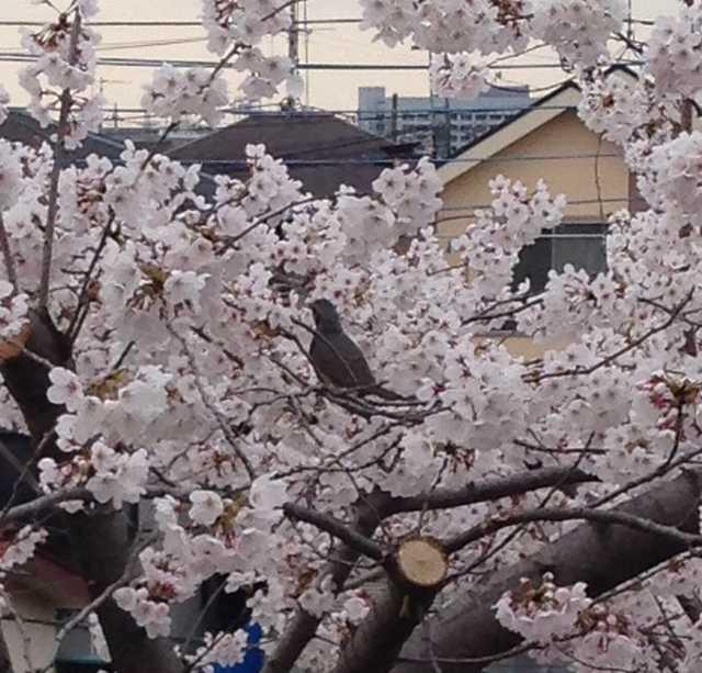 f:id:monkichi64:20140402162952j:image