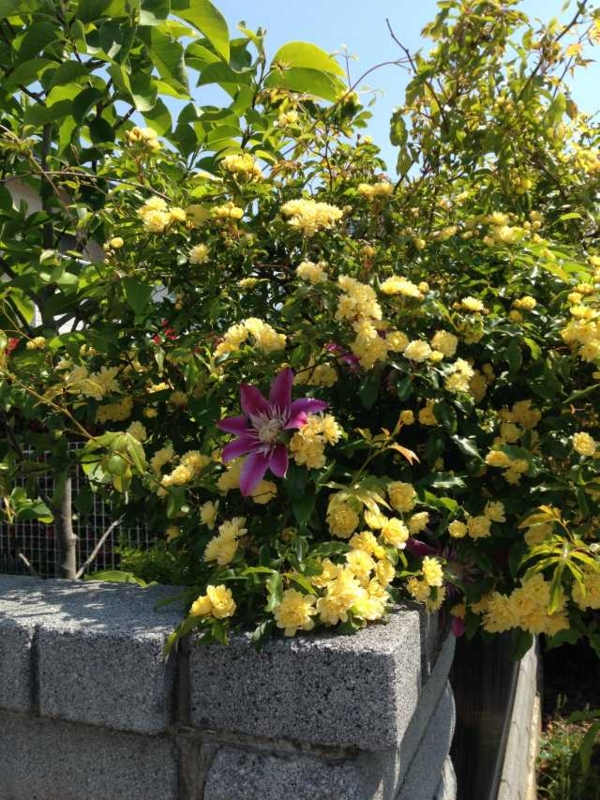 f:id:monkichi64:20140524093429j:image