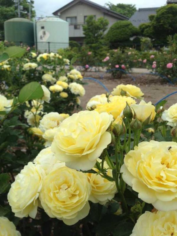 f:id:monkichi64:20140605111841j:image