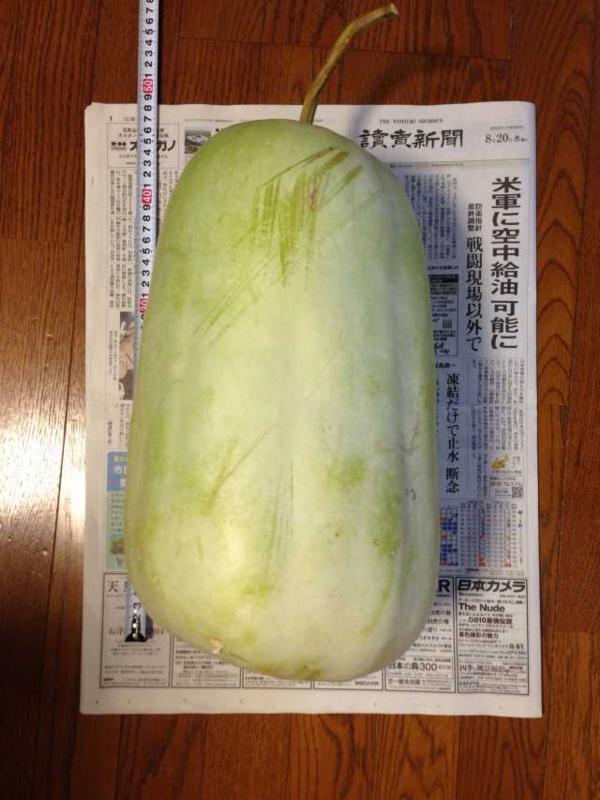 f:id:monkichi64:20140820080143j:image