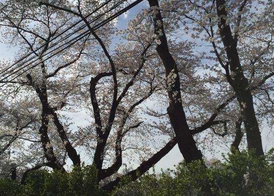 f:id:monkichi64:20150418160112j:image