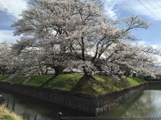 f:id:monkichi64:20150421143119j:image