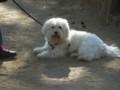 オラ!スペインの犬