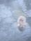 入浴する猿2。