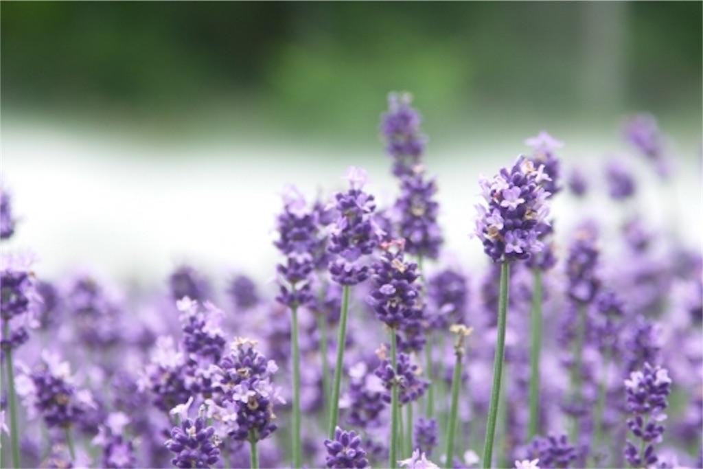 f:id:monteverde-aroma:20171111075952j:plain