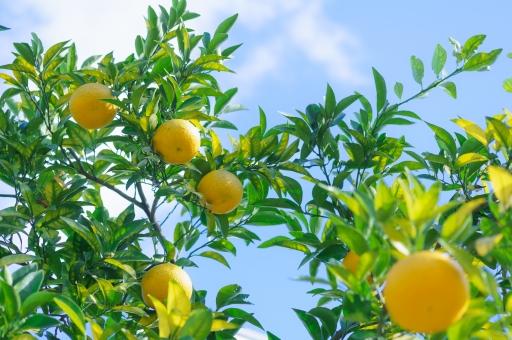 f:id:monteverde-aroma:20171112140658j:plain