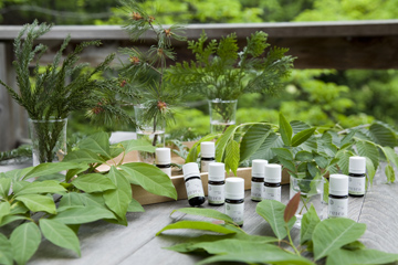 f:id:monteverde-aroma:20171112150019j:plain