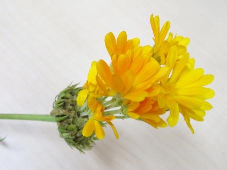 f:id:monteverde-aroma:20180201073209p:plain
