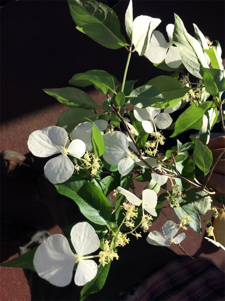 f:id:monteverde-aroma:20180520173324j:image