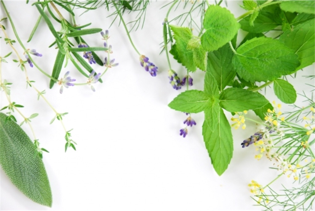 f:id:monteverde-aroma:20180606075457j:plain