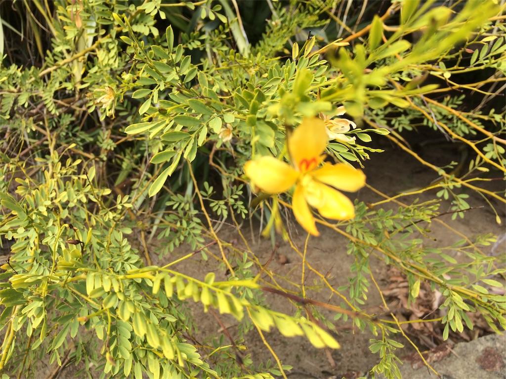 f:id:monteverde-aroma:20180920170741j:image