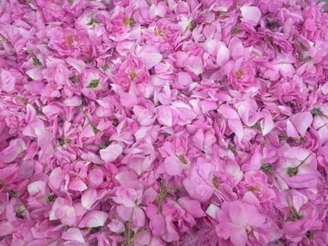 f:id:monteverde-aroma:20181030140006j:plain