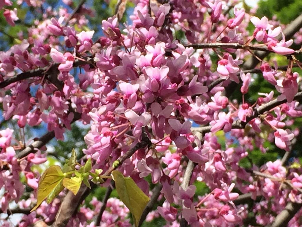 f:id:monteverde-aroma:20190616064801j:plain