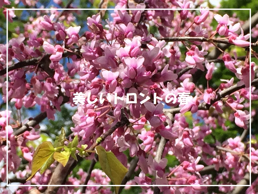 f:id:monteverde-aroma:20190616100251j:plain