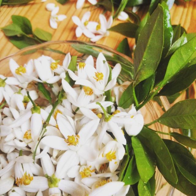 f:id:monteverde-aroma:20190717081304j:plain