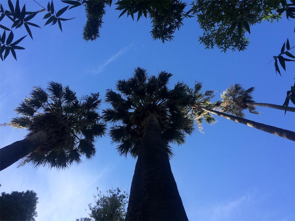 f:id:monteverde-aroma:20190811132615j:image