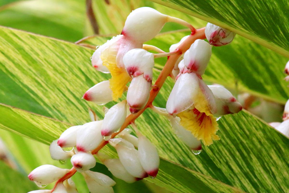 f:id:monteverde-aroma:20200116094309p:plain