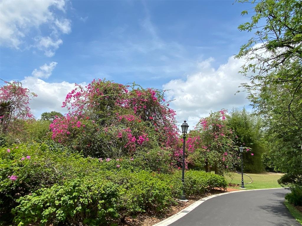 f:id:monteverde-aroma:20200214140019j:image