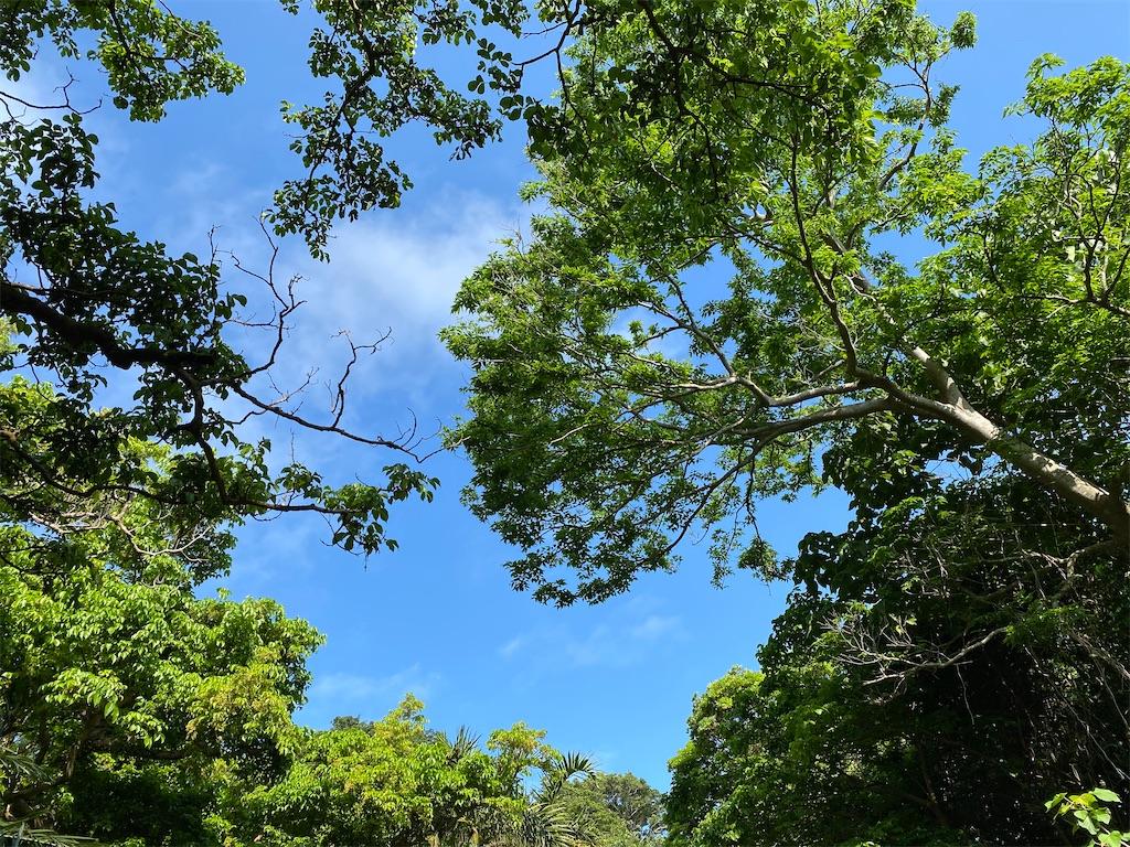 f:id:monteverde-aroma:20200315101034j:plain