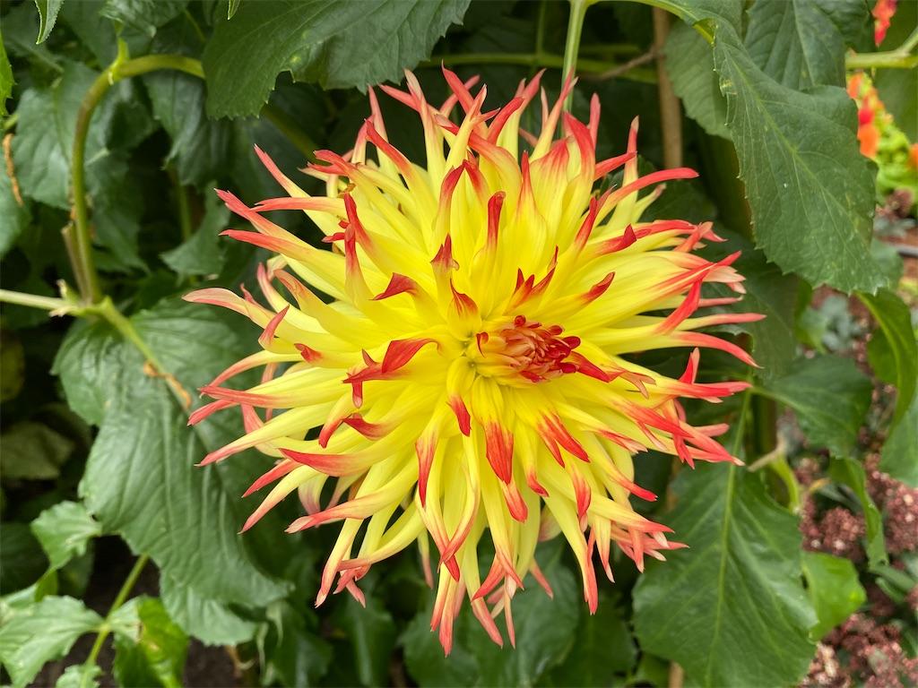 f:id:monteverde-aroma:20200404053814j:image