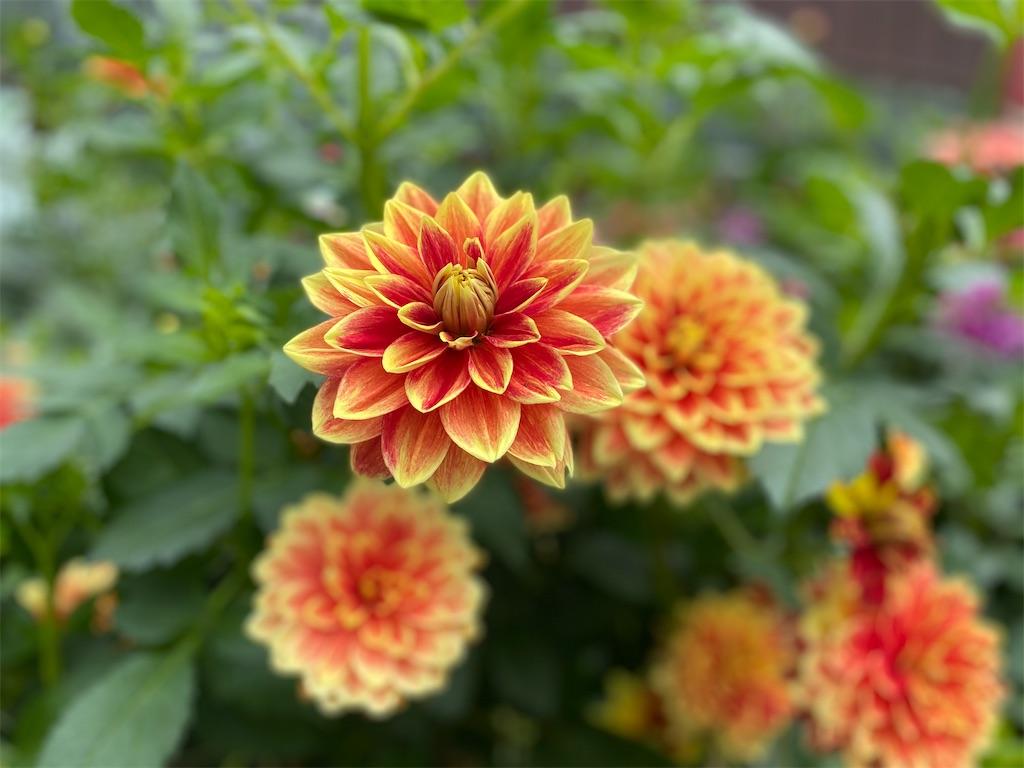 f:id:monteverde-aroma:20200404065830j:image