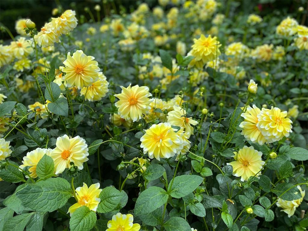 f:id:monteverde-aroma:20200404065837j:image