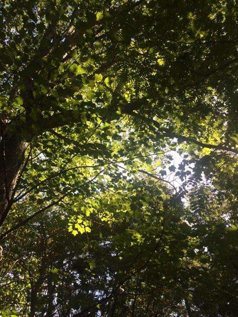 f:id:monteverde-aroma:20200413103914j:plain