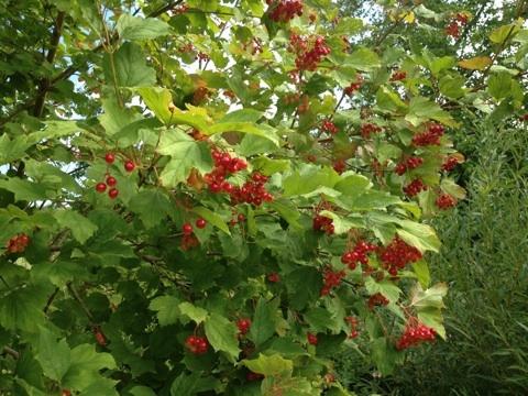 f:id:monteverde-aroma:20200507174118j:plain