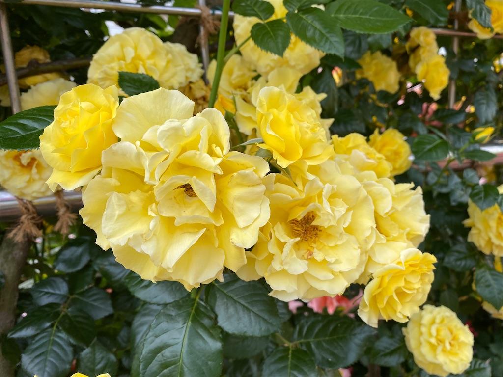f:id:monteverde-aroma:20200515072217j:image