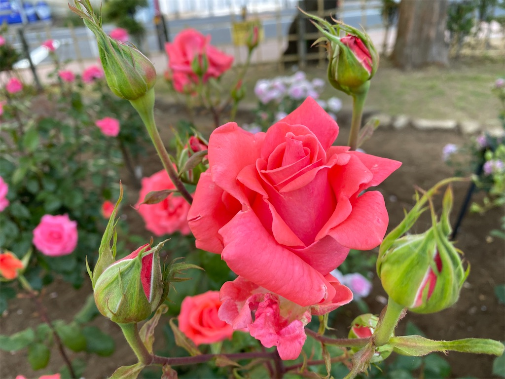 f:id:monteverde-aroma:20200515100726j:image