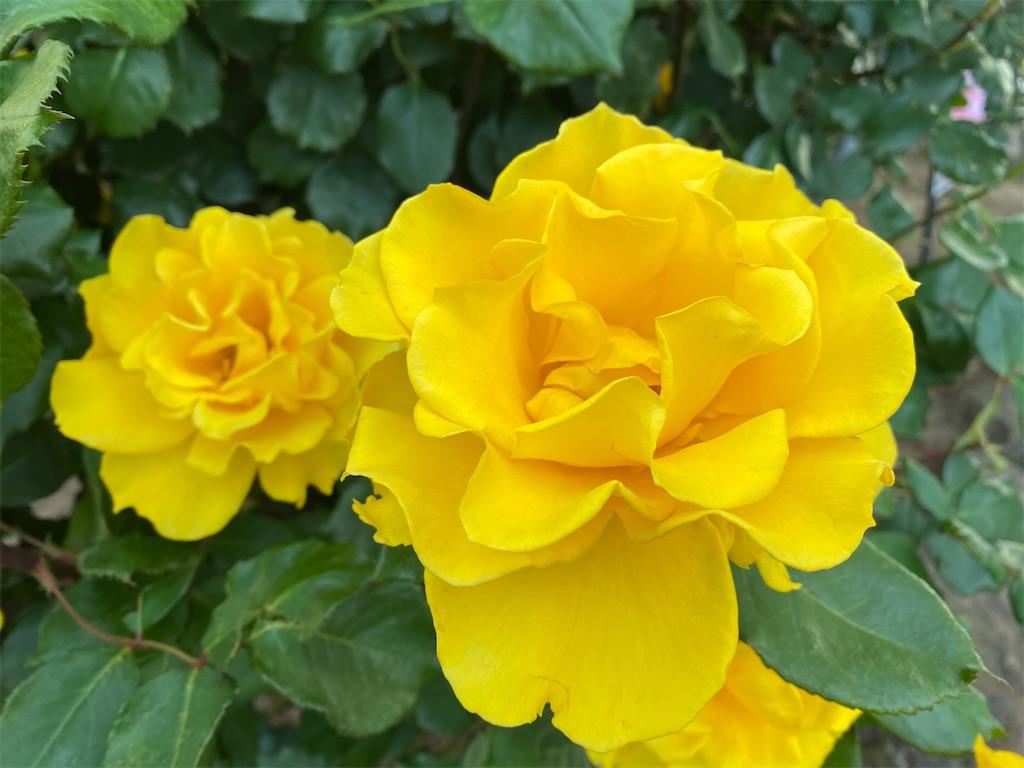 f:id:monteverde-aroma:20200515102143j:plain
