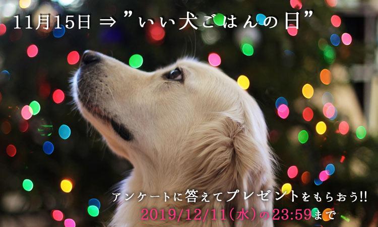 f:id:moonda:20191114201327j:plain