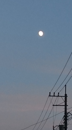 f:id:moonlightsurf:20190812193817p:plain