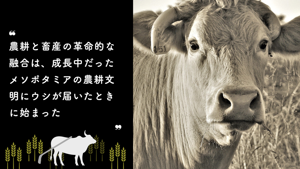f:id:moribitoo:20210217222145j:plain