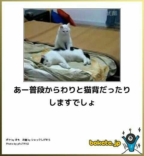 f:id:morifumikirikita319:20170202194857j:image