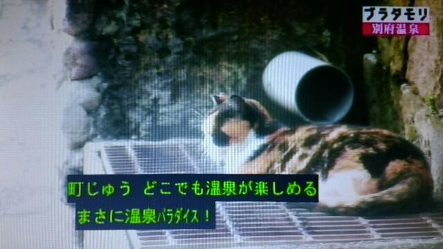 f:id:morifumikirikita319:20170204215553j:image