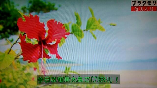 f:id:morifumikirikita319:20170304211157j:image