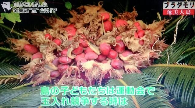 f:id:morifumikirikita319:20170305045913j:image