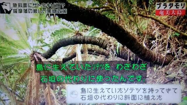 f:id:morifumikirikita319:20170305050120j:image