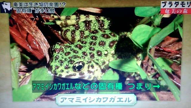 f:id:morifumikirikita319:20170325204136j:image